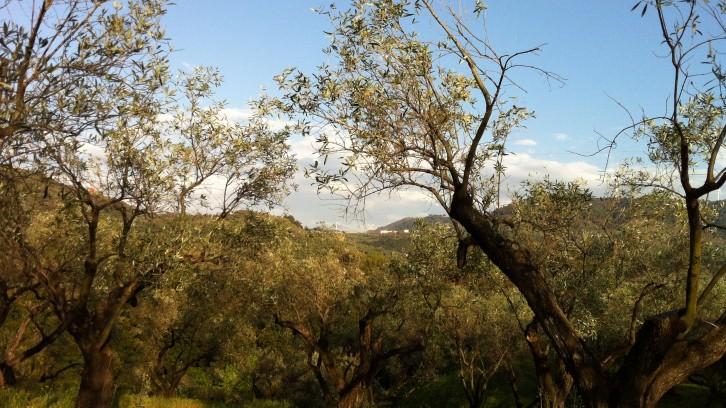 San pietro a maida origins italy my home away from rome san pietro a maida italy sciox Images